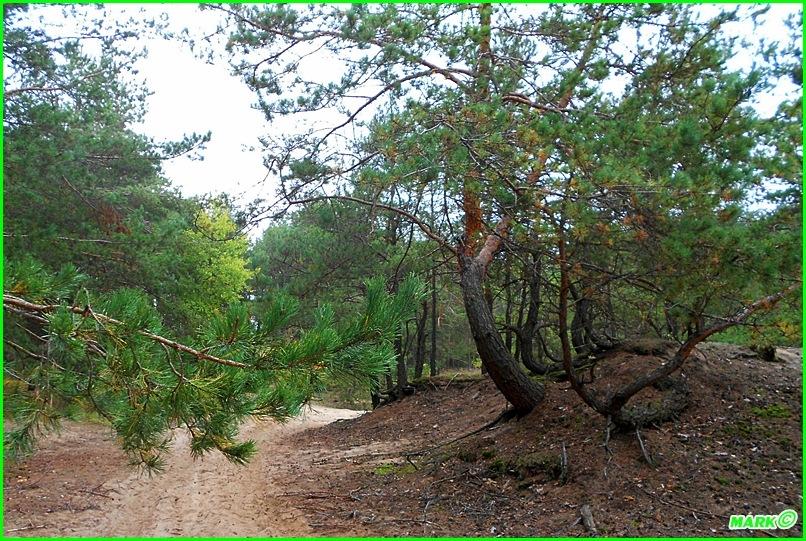 Jesień w Lesie - Blog (4)