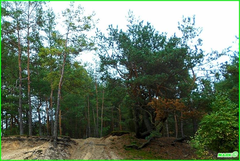 Jesień w Lesie - Blog (5)