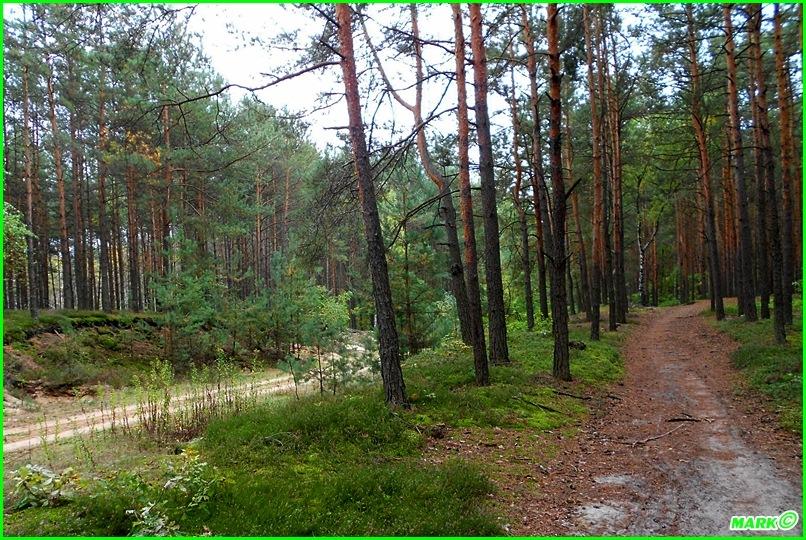 Jesień w Lesie - Blog (7)