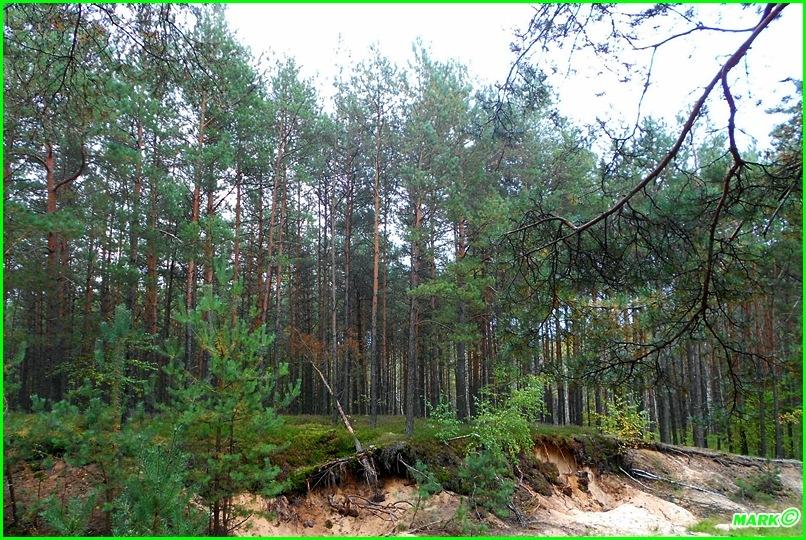 Jesień w Lesie - Blog (8)