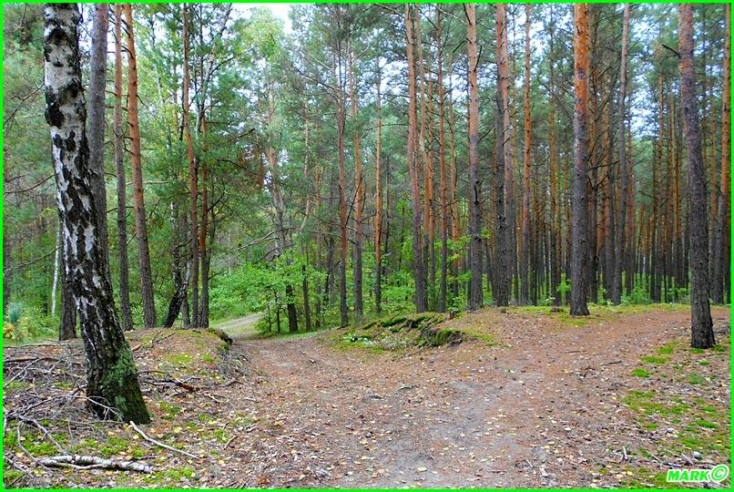 Jesień w Lesie - Blog (9)