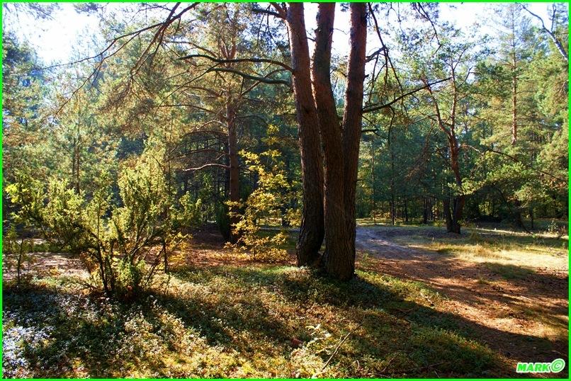 Jesień w Lesie - Blog