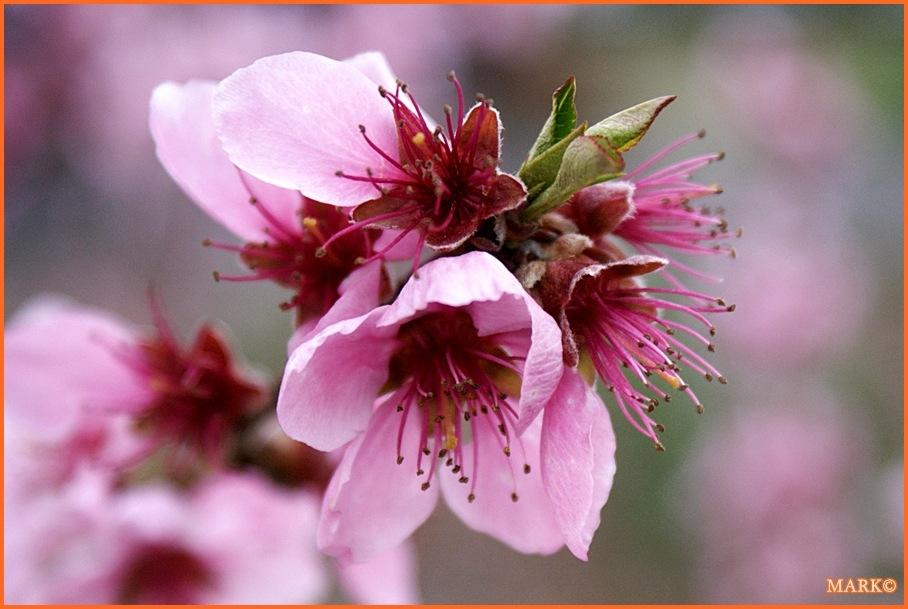 Kwitnące Gałązki - Blog 06