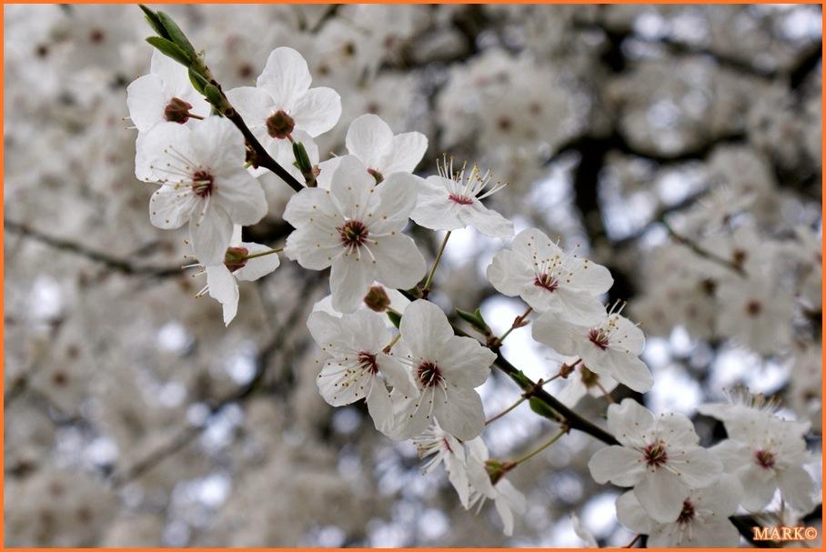 Kwitnące Gałązki - Blog 07