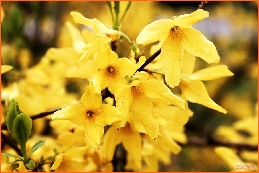 Kwitnące Gałązki - Blog 08