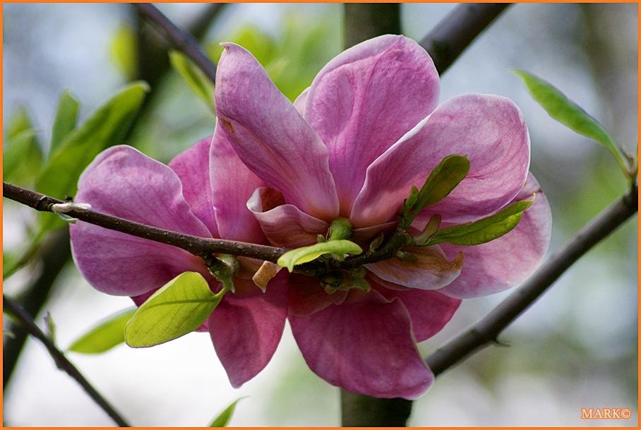 Kwitnące Gałązki - Blog 09