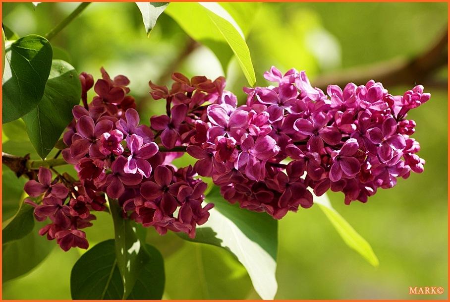Kwitnące Gałązki - Blog 12