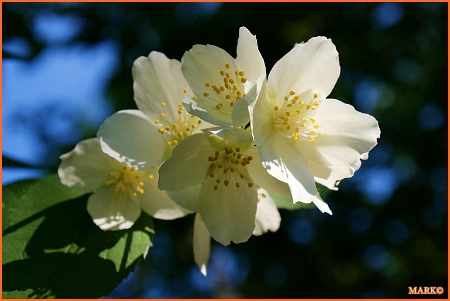 Kwitnące Gałązki - Blog 15
