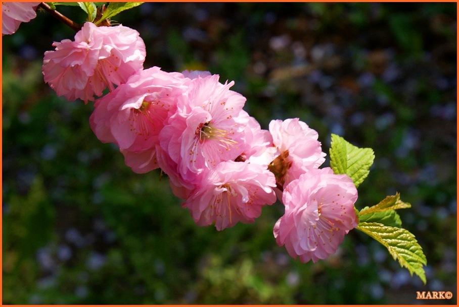 Kwitnące Gałązki - Blog 17