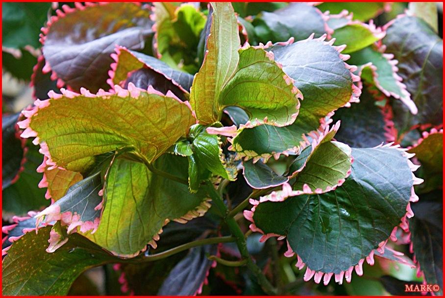Rośliny (10)