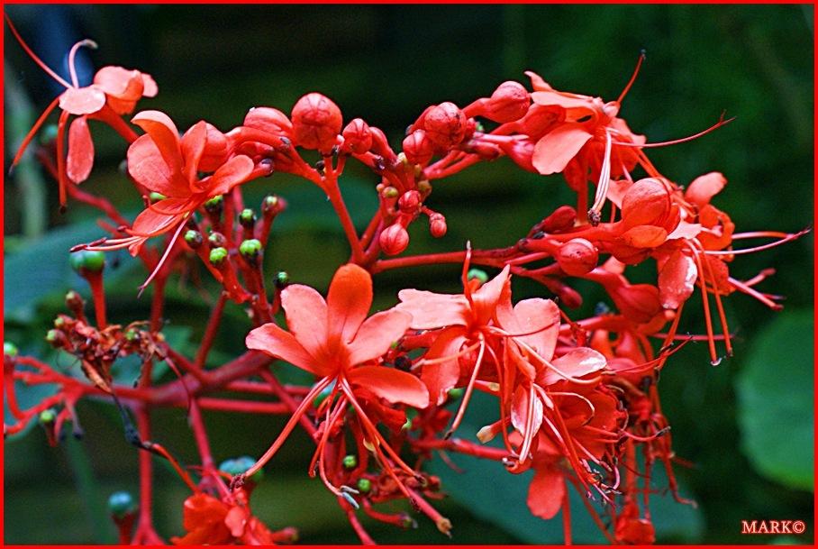 Rośliny (11)