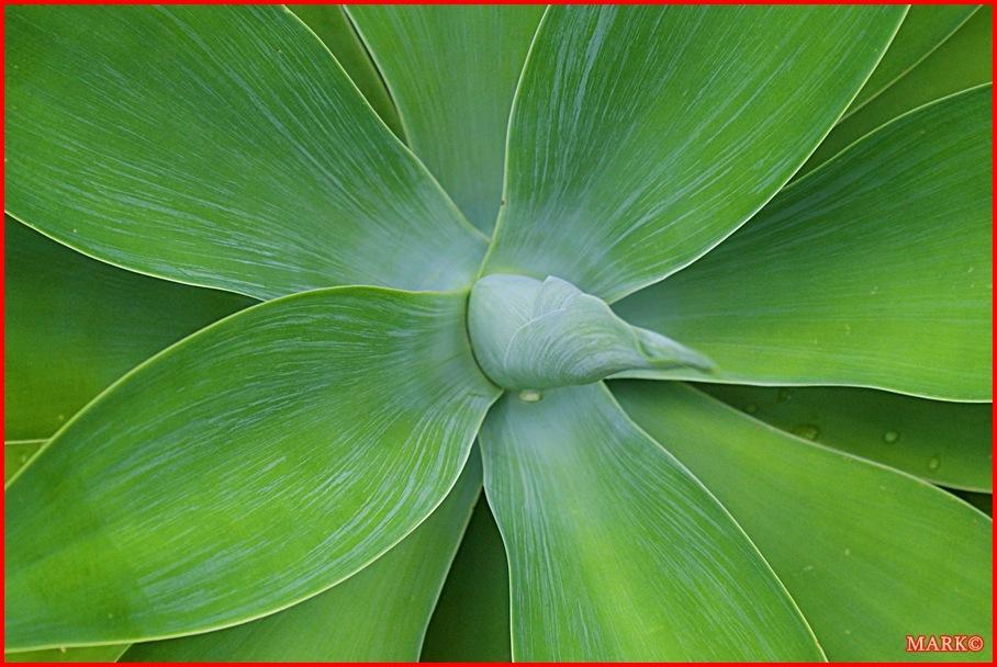 Rośliny (15)