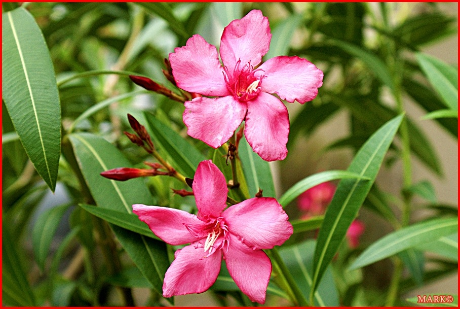 Rośliny (22)