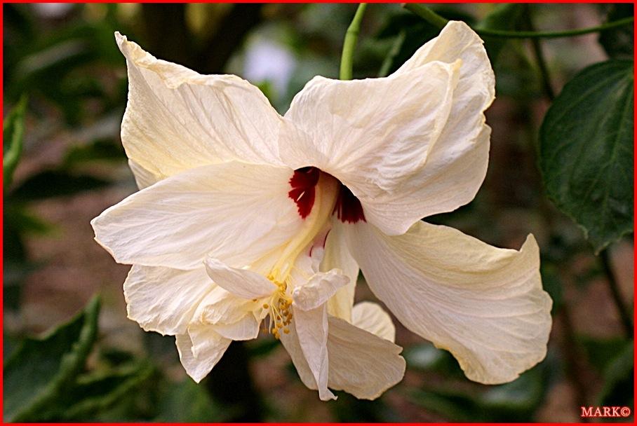 Rośliny (2)