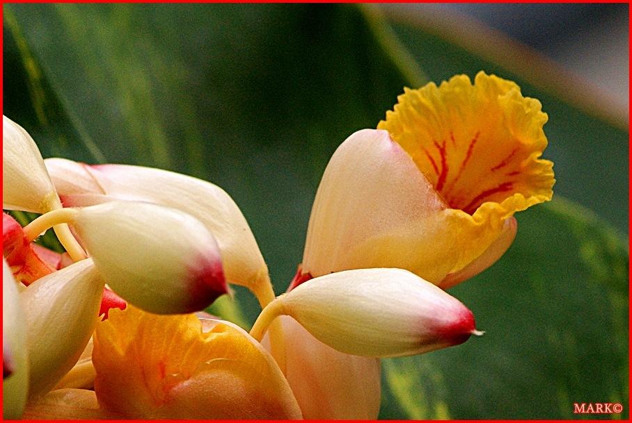 Rośliny (3)