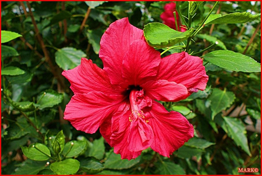 Rośliny (4)