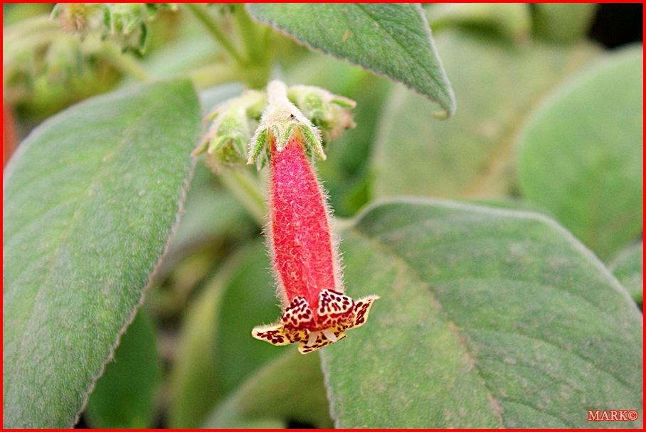 Rośliny (6)