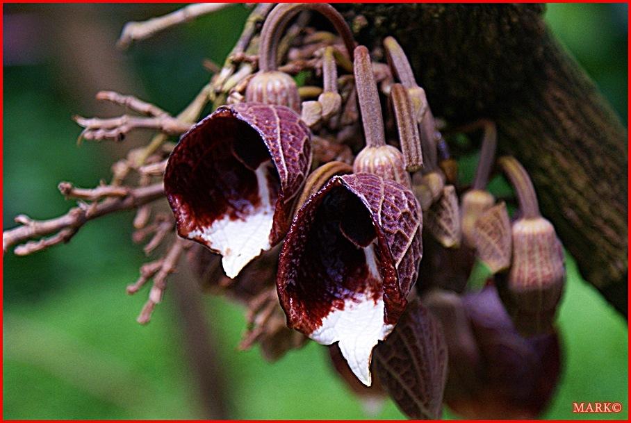 Rośliny (8)