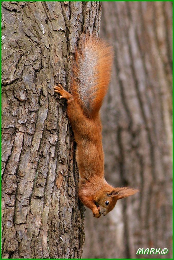 Wiewiórki 06