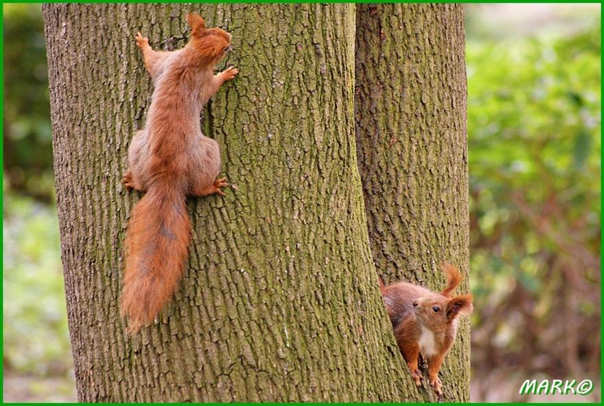 Wiewiórki 07