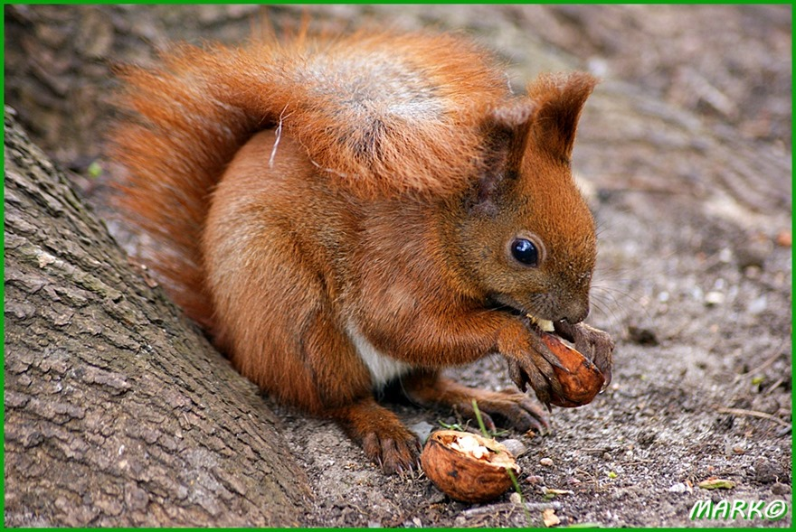 Wiewiórki 10