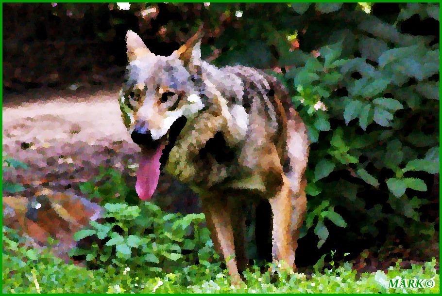 Wolf 01