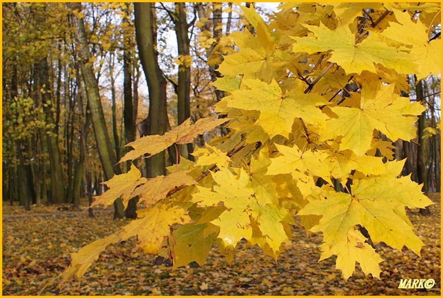 Autumn 6