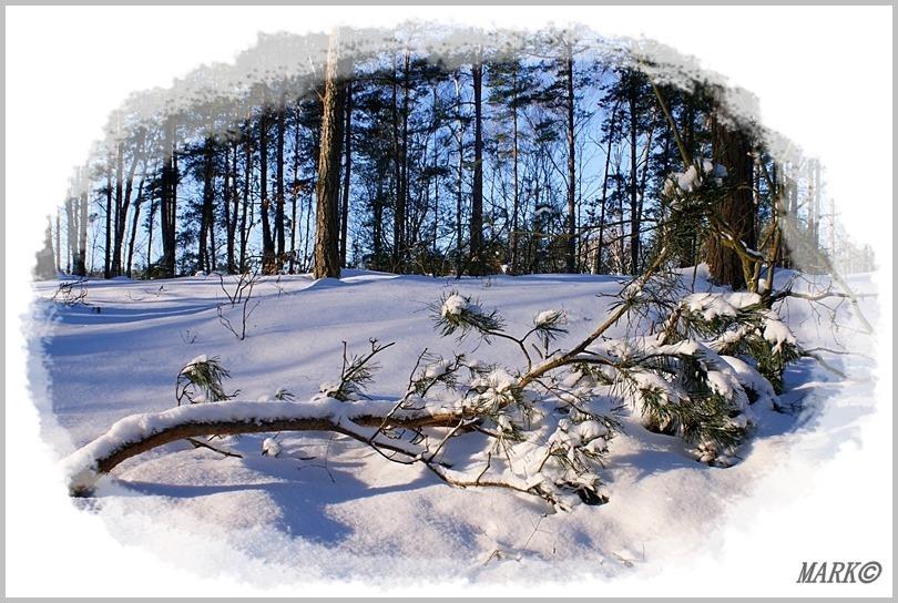 Zima 6