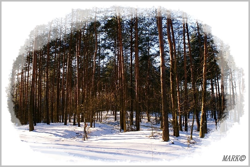 Zima 7